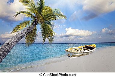 maldives., der, boot, auf, der, sandiger strand, und, a, palme, aus, wasser