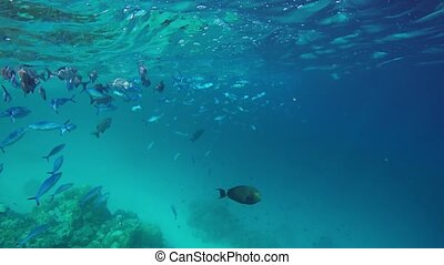 maldives, fermé, assorti, fish, surface, exotique, écrémage