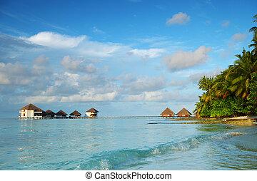 maldives landscape ocean palm sky