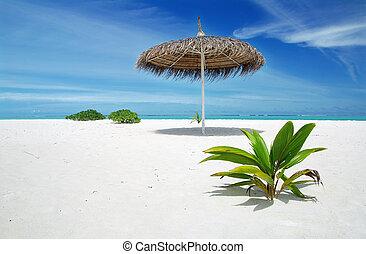 maldives, relaxe
