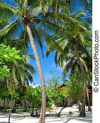 Maldives scenery