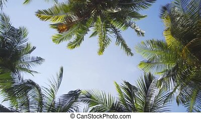 Maldives. The sky among the crowns of tropical palm trees. ...
