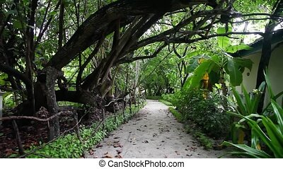 Maldives, walkway inside the island, lot of plats.
