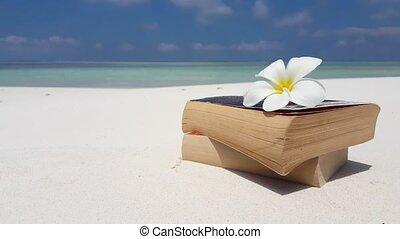 Maldives white sandy beach reading book on sunny tropical...