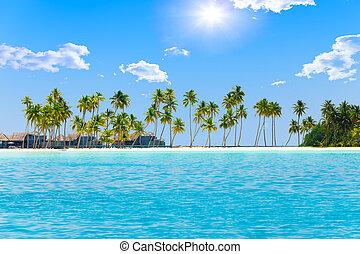 maldives., wyspa, drzewa, tropikalny, dłoń, ocean.