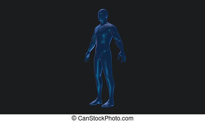 Male anatomical medical body rotation loop 4k alpha