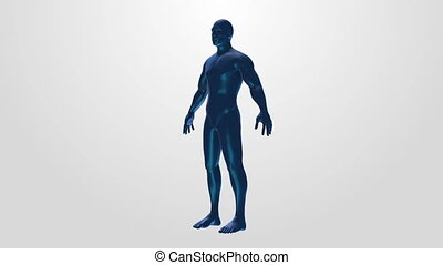 Male anatomical medical body rotation loop 4k