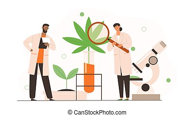 Male and female scientists in uniform are analyzing cbd hemp oil extract from marijuana plant
