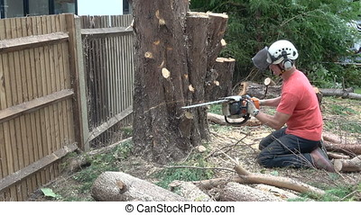 Male Arborist using a chainsaw. - Male Arborist using a...