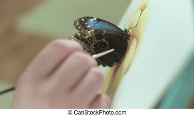 Male artist on an easel draws a flower beside a butterfly...