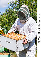 Male Beekeeper Carrying Honeycomb Box At Apiary - Young male...