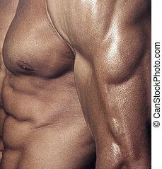 Male body - Body of muscular man. Vertical studio shot