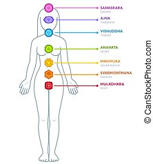 Male body chakras infographic - Full body female figure with...