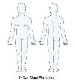 Male body front and back