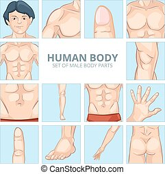 Male body parts in cartoon style. Vector icons set