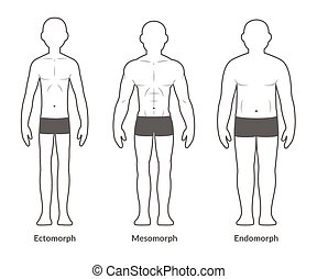 Male body type chart