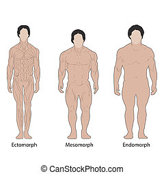 male body types