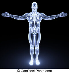 male body under X-rays. 3d render