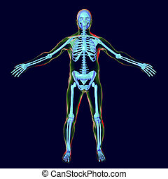 Male body with skeleton inside