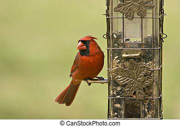 Male Cardinal on Feeder - Beautiful Male Northern Cardinal...