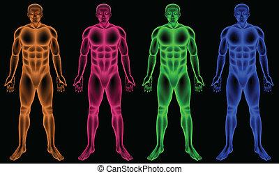 Male coloured bodies