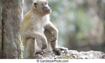 Male cute wild monkey sitting in a tree