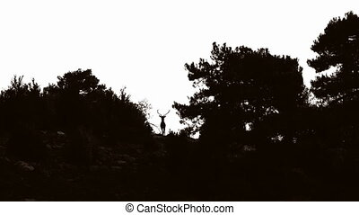 Male deer at top of hill against light moving head - Backlit...