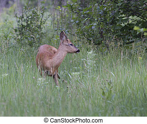Male deer in a forest clearing.