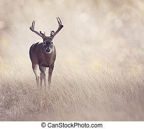 Deer in a grassland