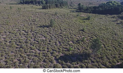 Male deers running in the smoothness, aerial view - Aerial...