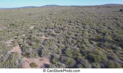 Male deers stopping in the smoothness, aerial view - Aerial...