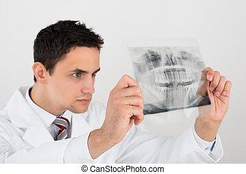 Male Dentist Examining Dental Xray