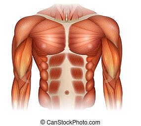 Male diastasis Recti also known as Diastasis Rectus...