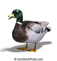 male duck mallard - 3D rendering with clipping path and ...