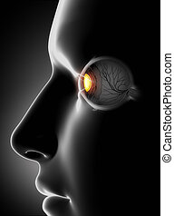 Male face with human eye antomy