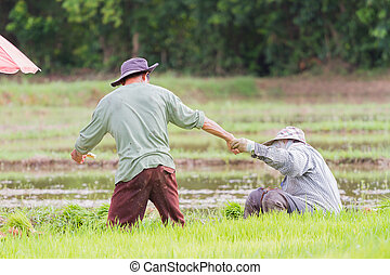 male farmer holding hand of a woman in the field, Thailand