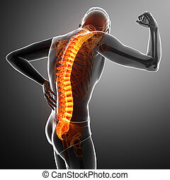 Male Feeling the back pain - 3D Illustration of male Feeling...