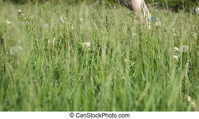Male feet running in field. Legs of athlete jogging on green grass in nature. Sports runner going on rural trail. Cross-country training. Slow motion Side view