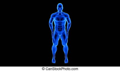 male fitness body transformation, front view - muscle mass building animation on black background with alpha channel