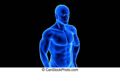 male fitness body transformation - muscle mass building animation on black background with alpha channel