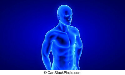 male fitness body transformation, muscle mass building animation on blue background