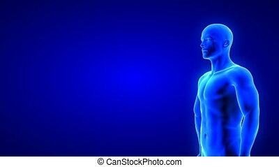 male fitness body transformation - muscle mass building animation on blue background