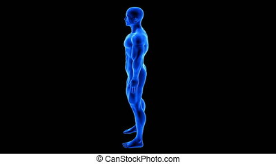 male fitness body transformation, rotation view - muscle mass building animation on black background with alpha channel