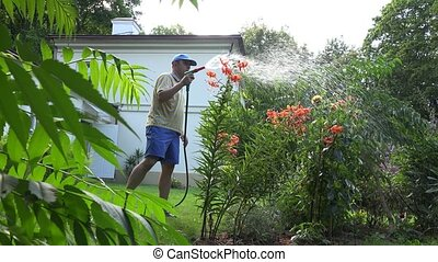 Male florist man watering orange lily flowers with hose sprayer tool in house yard.