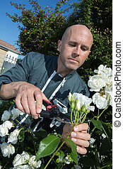 male gardener cutting flowers