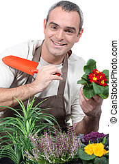 Male gardener potting plants