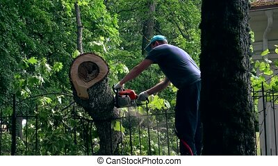 male gardener working on felled tree with chain saw.