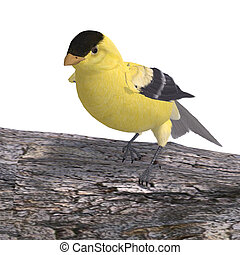 Male Goldfinch. 3D rendering with clipping path and shadow over white
