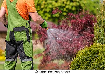 Male Groundkeeper Watering Plants In Garden.