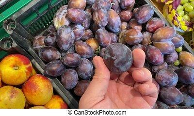 Male hand chooses plums on a local farmer organic market. ...